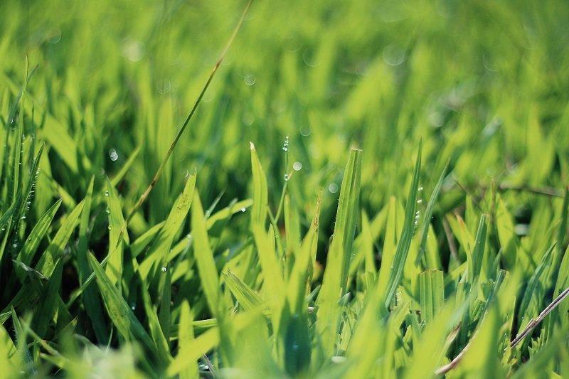 best walk behind fertilizer spreader