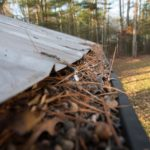 rain gutter full of pine needles