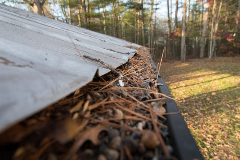 best gutter guards for pine needles