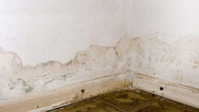 how to dispose of drywall with mold